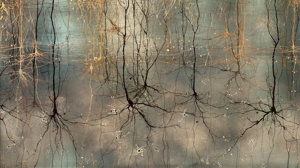 Risultati immagini per neuroscienze e arte