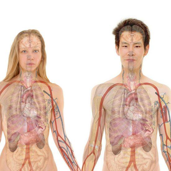 uomo e donna modelli anatomia