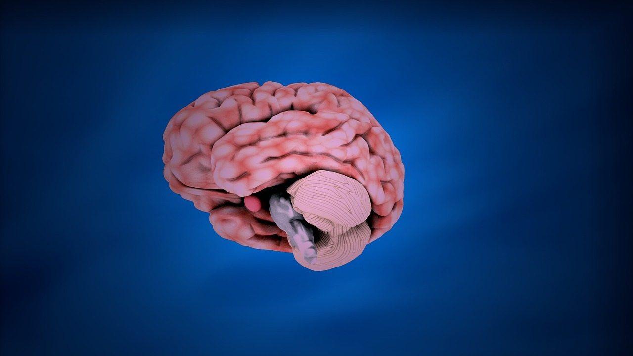 cervello rosa su sfondo blu