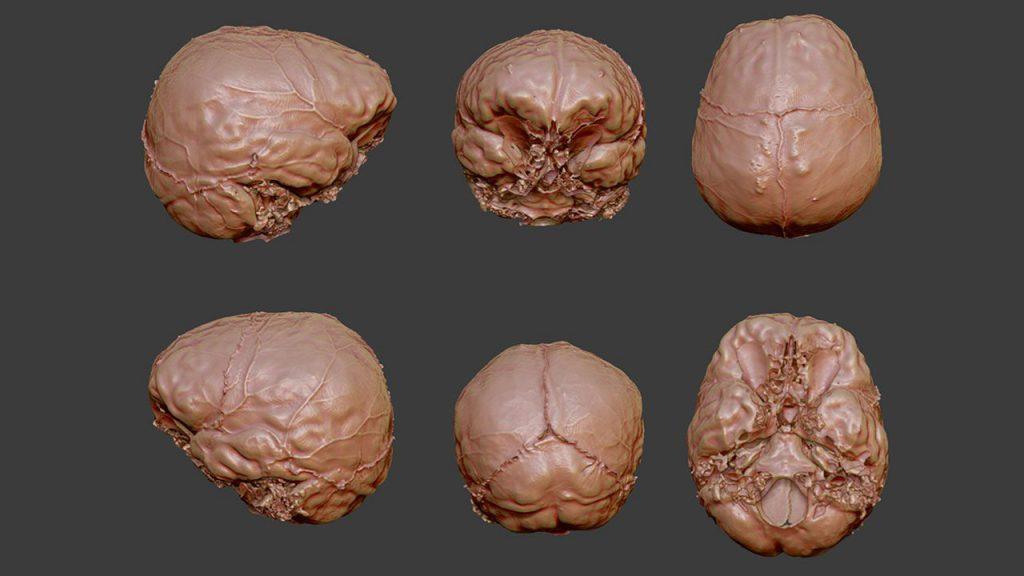 cervello di cartesio