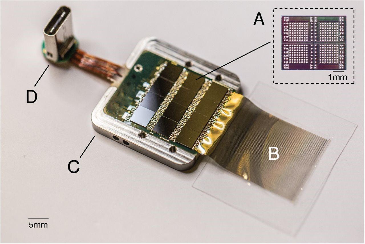 Dettaglio del sensore utilizzato per raccogliere e decifrare il segnale elettrico registrato dagli elettrodi. È possibile notare i 12 chip ASIC in grado di raccogliere i dati di 256 canali ciascuno e i fili contenenti gli elettrodi che verranno impiantati nel cervello (B). Il sensore è racchiuso in un gusto di titanio (C) e ha in uscita un connettore digitale USB-C (D).