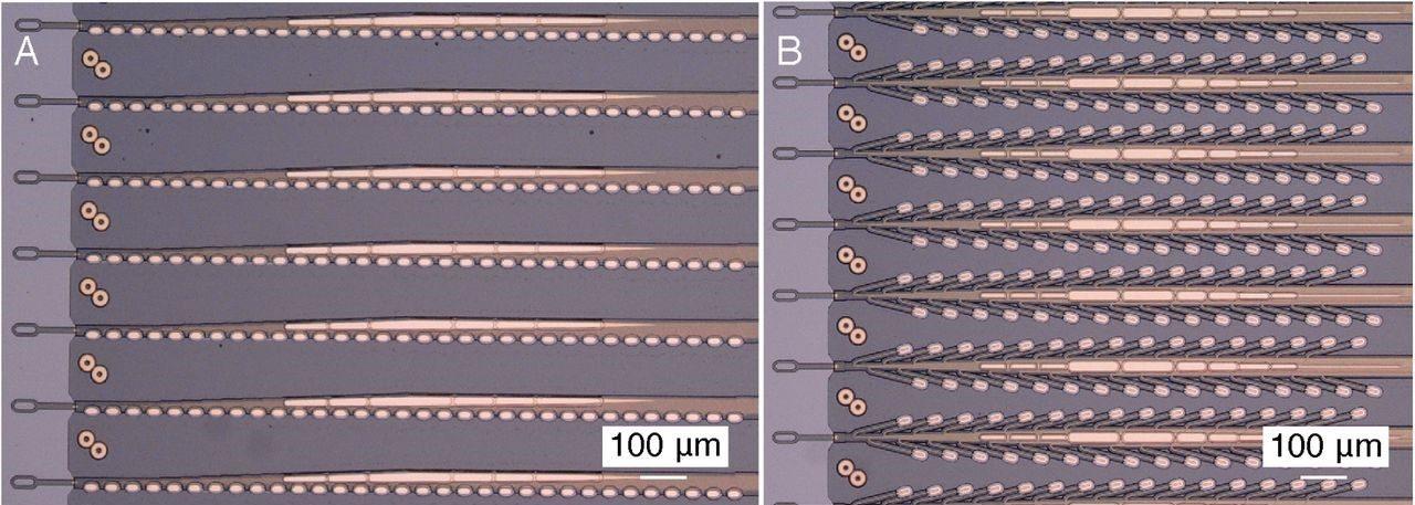 "Elettrodi in polimero sviluppati da Neuralink. A. 32 elettrodi disposti linearmente a 50 μm di distanza. B. 32 elettrodi disposti ""ad albero"" a 75 μm di distanza."